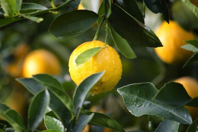 reife Zitrone Zitrusfrucht (Quelle: pexels.com/@ryan-baker-35851)